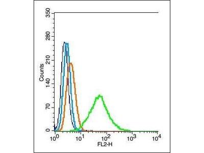 PEF1 antibody