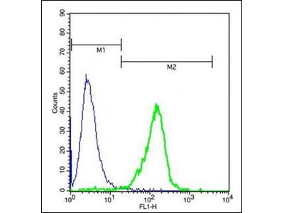 Nucleolar protein 3 antibody