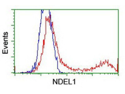 Mouse Monoclonal Nudel Antibody