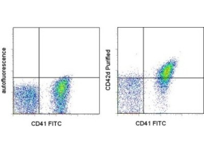 Armenian Hamster Monoclonal Glycoprotein V / CD42d Antibody