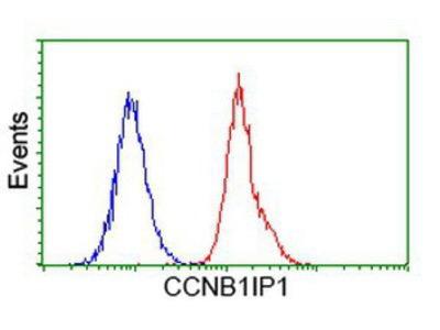 CCNB1IP1 Antibody (OTI4H3)