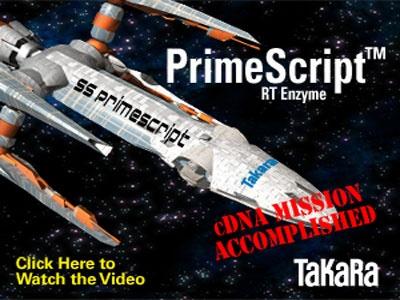 PrimeScript Reverse Transcriptase
