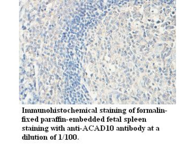 ACAD10 Antibody
