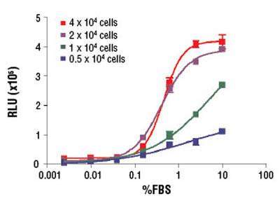 BrdU Cell Proliferation Chemiluminescent Assay Kit