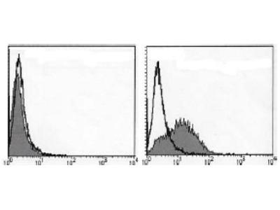 anti IL1RL1 / ST2