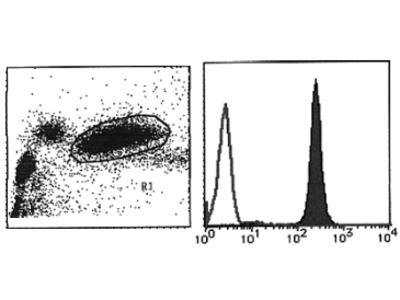 anti Vanin-2 / FOAP-4