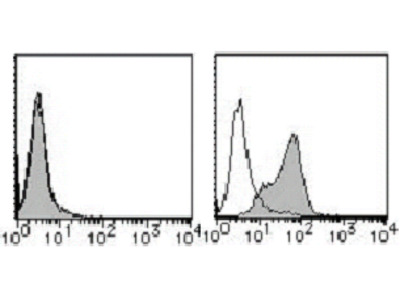 anti CD155 / PVR