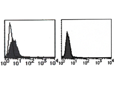 anti Mouse MAIR-2 (Myeloid-Associated Immunoglobulin-like Receptor)