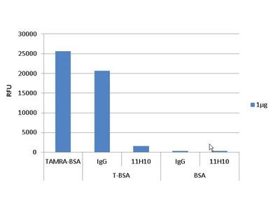 TAMRA Monoclonal Antibody (11H10)