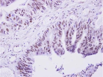 PRAM1 Polyclonal Antibody