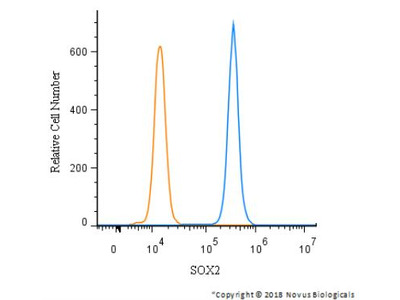 Rabbit Polyclonal SOX2 Antibody