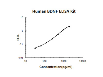 Quantification of BDNF Post-Transfection in Primary Neuronal Cells