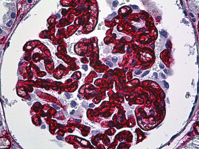 CD34 Antibody [QBEnd/10]