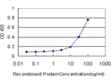 beta-Defensin 4 / 2 Antibody (4C4)