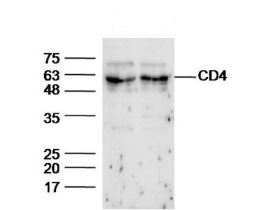 CD4 Antibody, ALEXA FLUOR® 350 Conjugated
