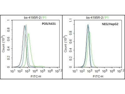 ADAM8 Antibody, ALEXA FLUOR® 350 Conjugated