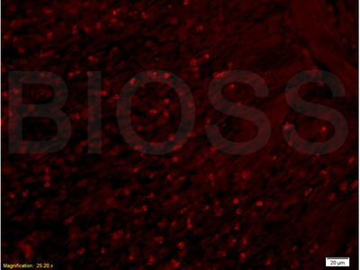 APOA2 Antibody, ALEXA FLUOR® 350 Conjugated