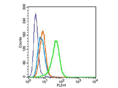 Perilipin A+B Polyclonal Antibody