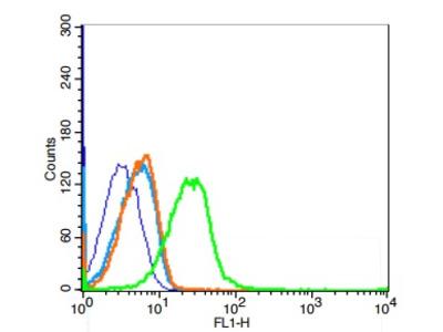 Uromodulin Antibody, ALEXA FLUOR® 350 Conjugated