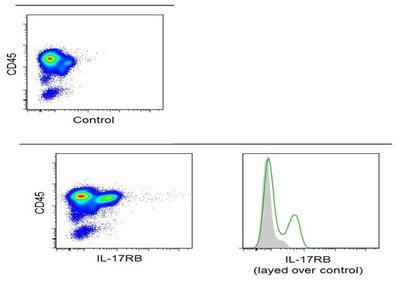 IL-17RB Antibody, ALEXA FLUOR® 488 Conjugated