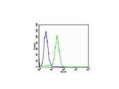CK18 Antibody, ALEXA FLUOR® 350 Conjugated