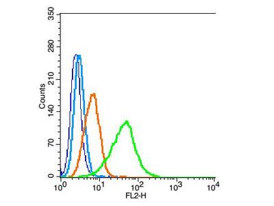 Nitrotyrosine Antibody, Biotin Conjugated