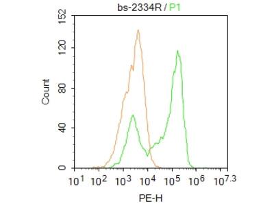 PXR Antibody, ALEXA FLUOR® 555 Conjugated