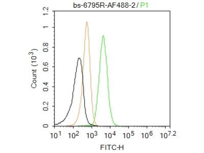 CHAC1 Antibody, ALEXA FLUOR® 488 Conjugated