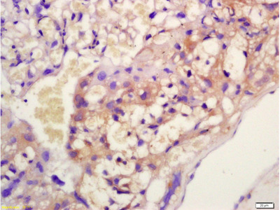 EIG121 Antibody, ALEXA FLUOR® 350 Conjugated