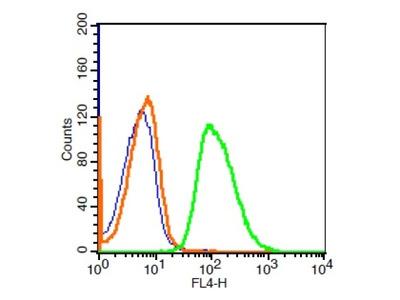 Phospholipase C beta 2 Antibody