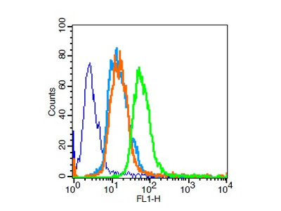 PPAR Gamma Polyclonal Antibody