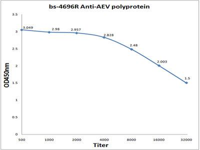 AEV polyprotein Antibody