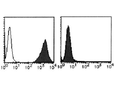 anti CD212 / IL12RB1