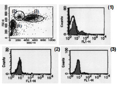 anti CD279 / PD1