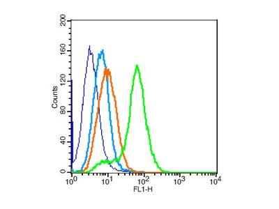 ZEB Antibody, ALEXA FLUOR® 350 Conjugated