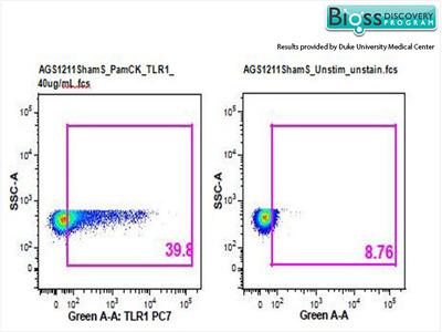 TLR1 Antibody, ALEXA FLUOR® 350 Conjugated