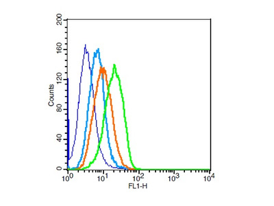 Cardiac Troponin I Antibody, ALEXA FLUOR® 350 Conjugated