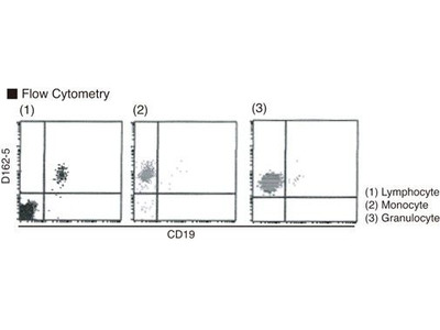 Anti-Flavocytochrome b558 (Human) mAb-PE