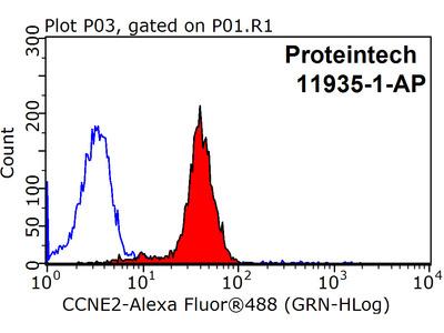 Cyclin E2 Polyclonal Antibody