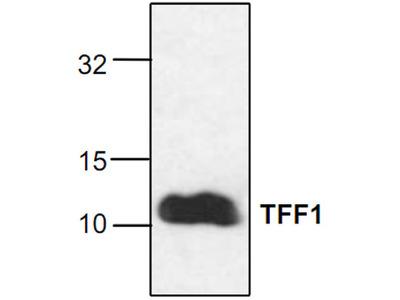 TFF1 Antibody