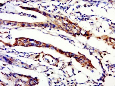 C20orf112 antibody