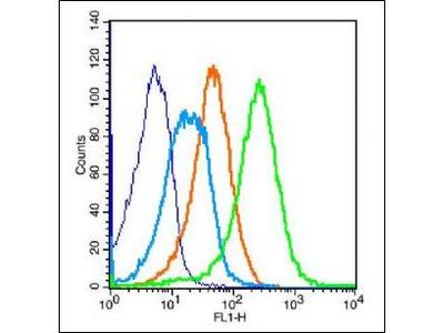 PCDH12 antibody