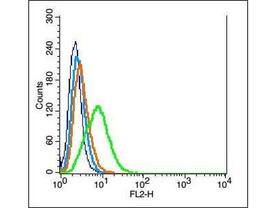 C3orf17 antibody