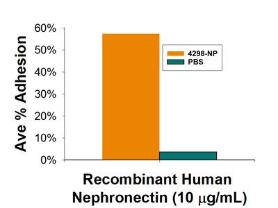 Nephronectin Protein