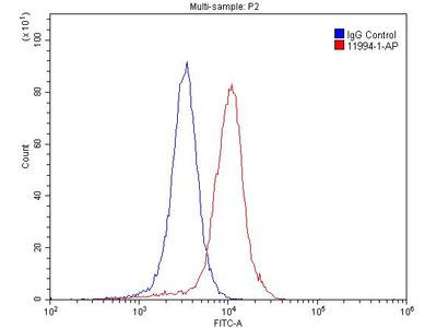 Glutamate receptor 2 Antibody