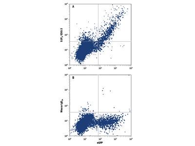 S1P3 / EDG-3 PE-conjugated Antibody