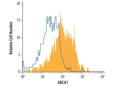 Human ABCA1 Antibody