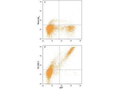 S1P3 / EDG-3 Antibody