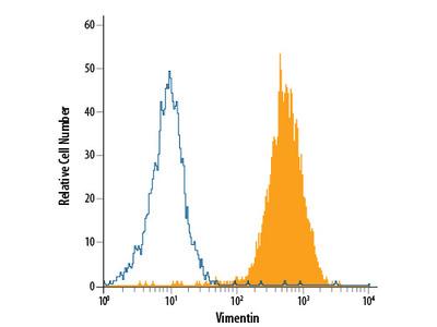 Vimentin APC-conjugated Antibody