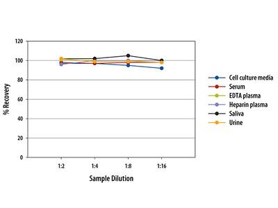 Human C1q R1 / CD93 Quantikine ELISA Kit